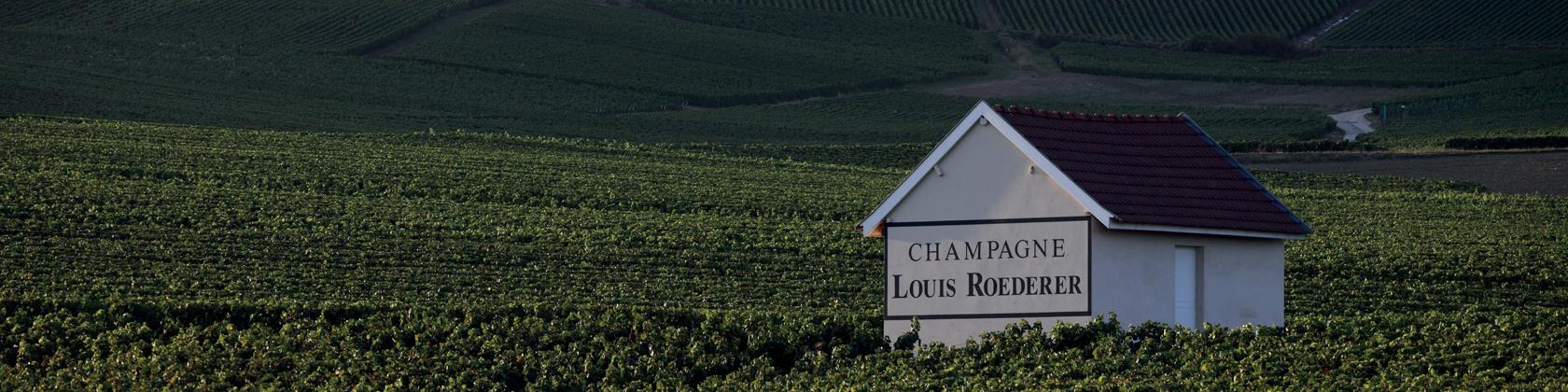 Champagne LOUIS ROEDERER: Weinberge